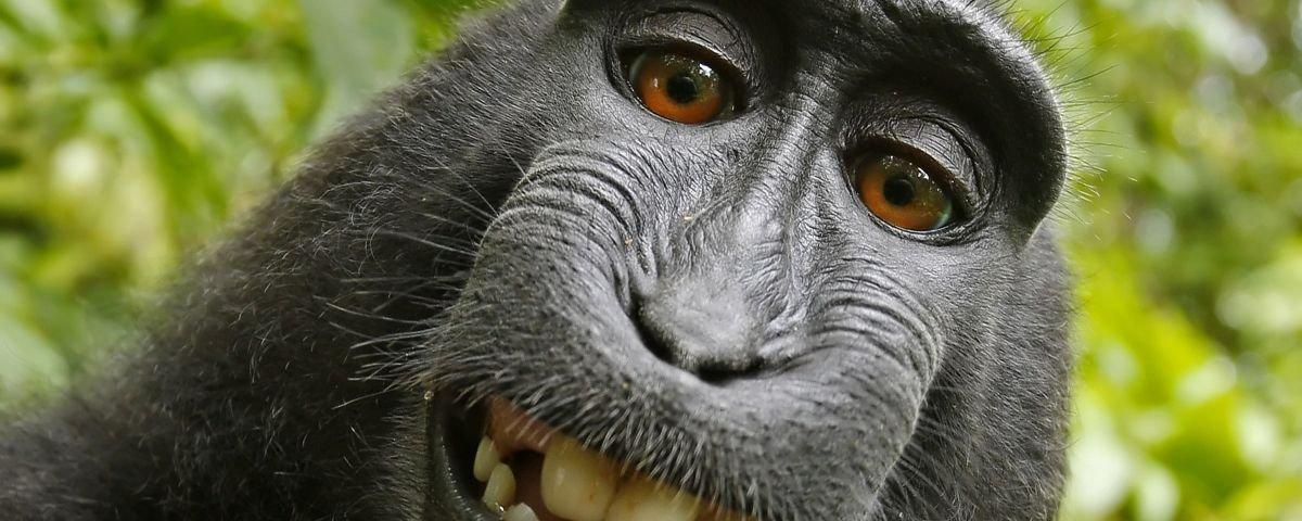 Você se lembra desta selfie? Fotógrafo humano agora está falido