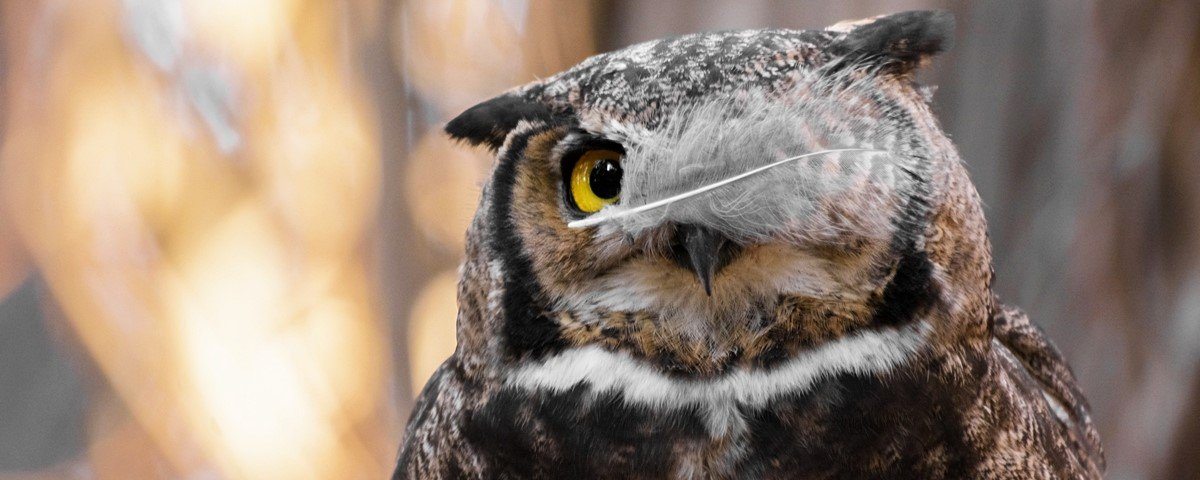 12 fotos hilárias de animais capturadas no momento exato