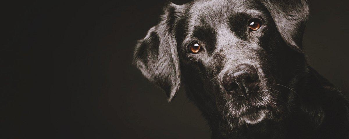 15 cães que não ficaram pequenos por muito tempo
