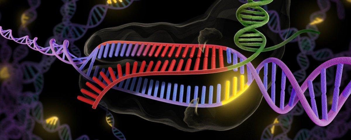 CRISPR: novos avanços podem mudar o futuro dos transplantes de órgãos