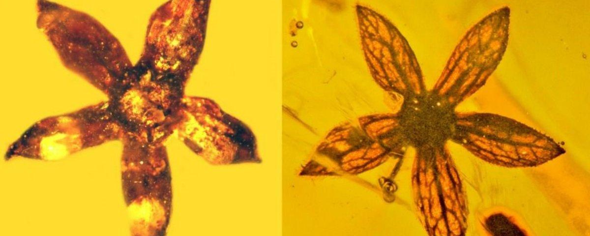Pesquisadores encontram flores preservadas há 100 milhões de anos