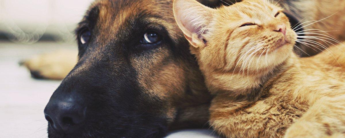13 presentes improváveis que os humanos já receberam dos seus animais