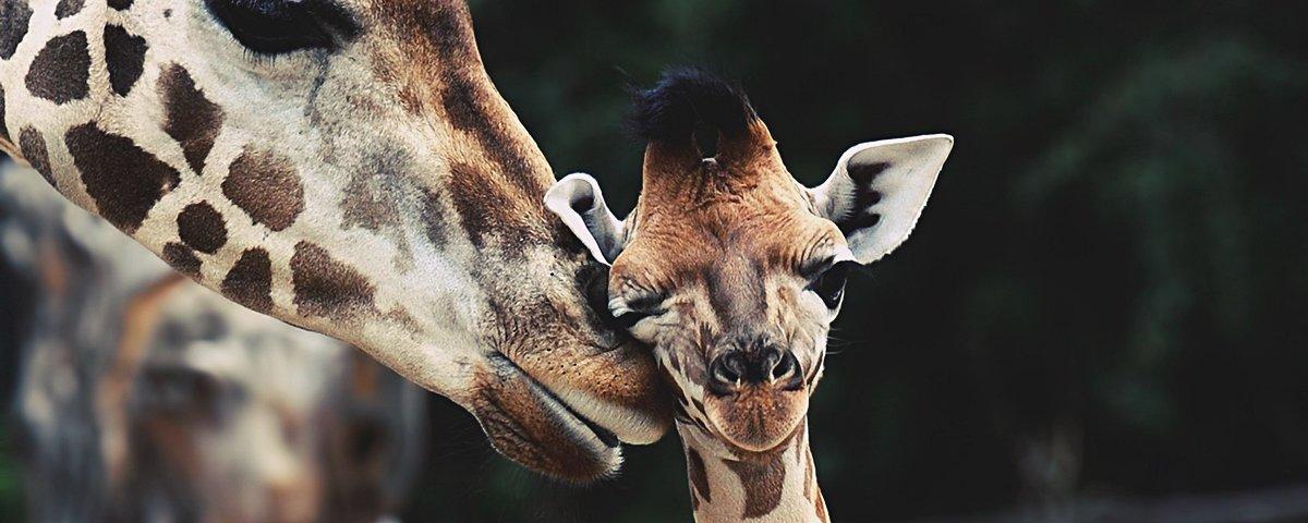 Mais 17 provas de que os animais são ainda mais fofos quando filhotes