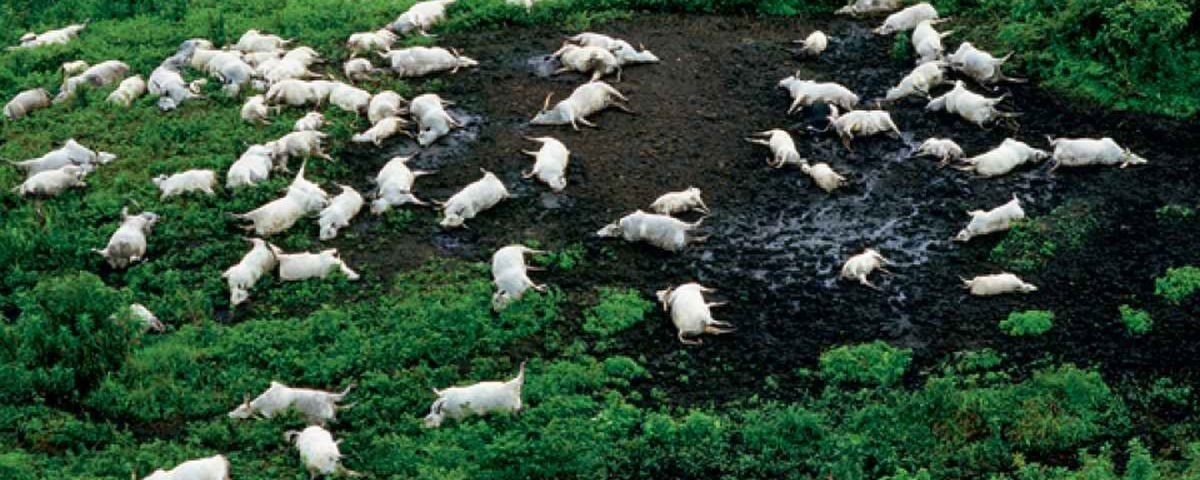 Acidente bizarro: lago mata quase 2 mil pessoas em uma noite na África
