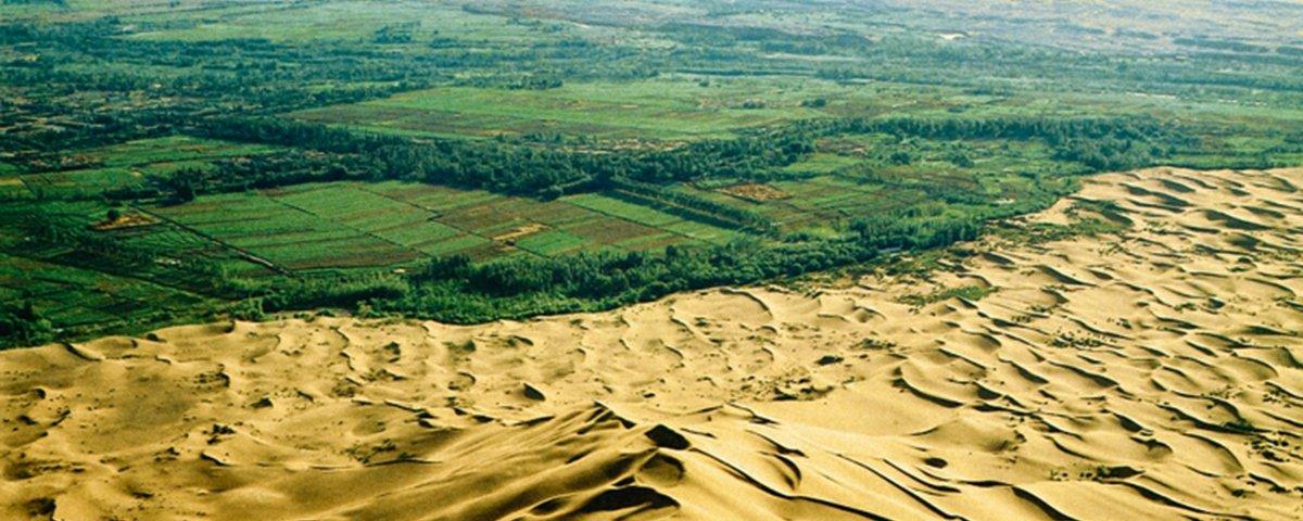 Por que está sendo erguida uma muralha de árvores no meio da África?