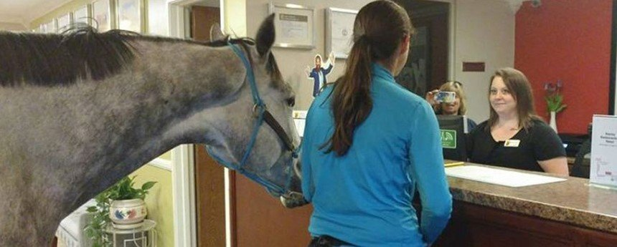 Mulher faz check-in com cavalo em hotel para testar política de pets
