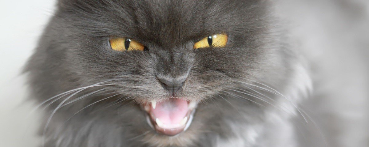 Por que os gatos ficam loucões depois de fazer cocô?