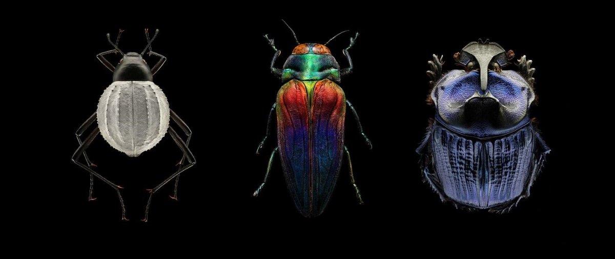 Esta coleção revela a surpreendente e inesperada beleza dos insetos