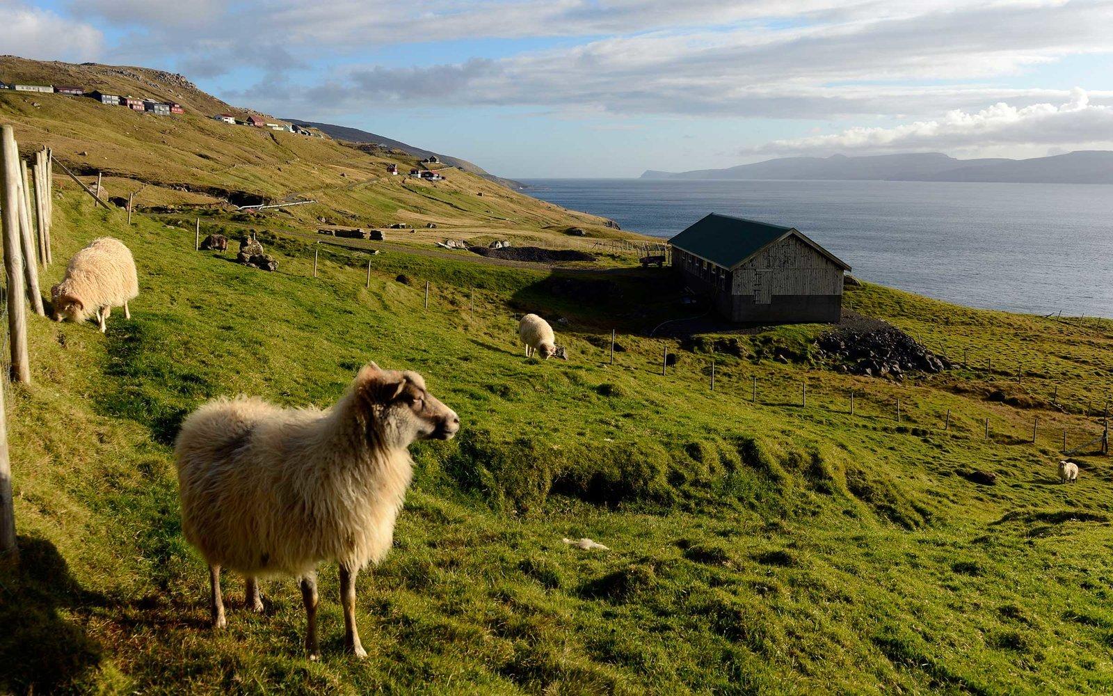 Imagens no estilo Street View das Ilhas Faroé foram feitas com ovelhas