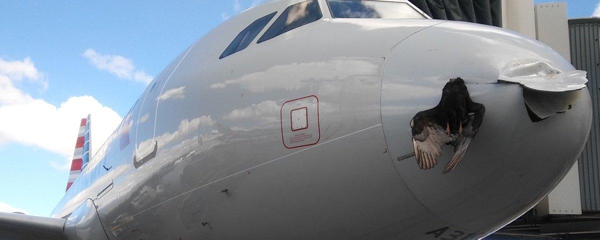Que susto! Avião pousa nos EUA com ave presa na fuselagem [vídeo]