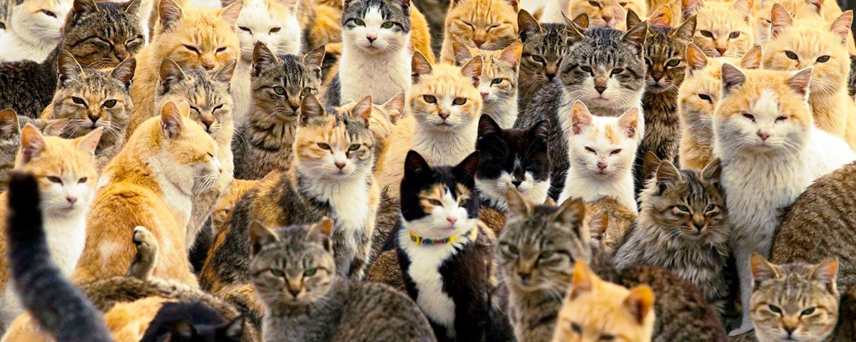 9 fatos para aumentar seu repertório sobre a vida dos gatos