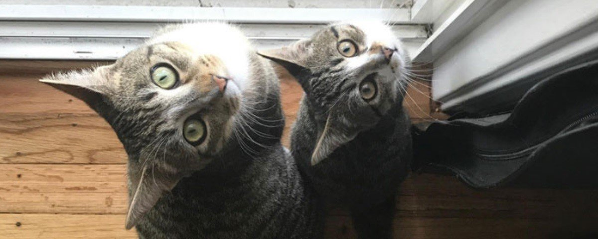 Desafio: você consegue não rir destes 17 Snapchats de gatos sendo gatos?