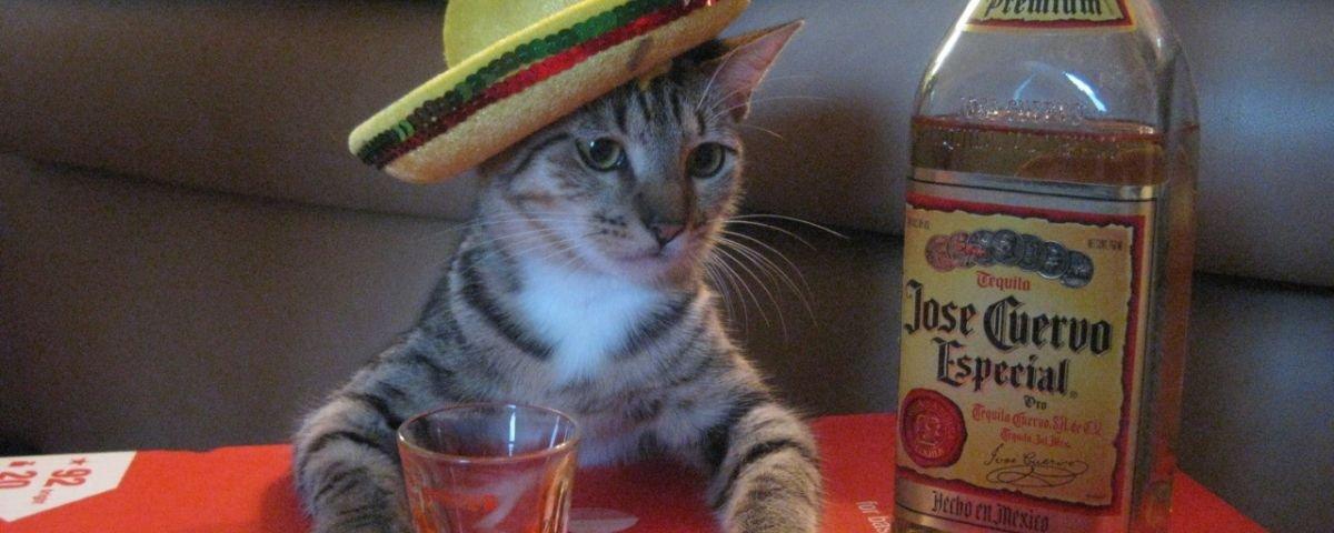 """Arriba, muchachos: 7 benefícios """"mucho locos"""" da tequila para a sua saúde"""
