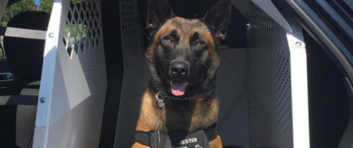 Piscou, perdeu: tente ver um dos cães mais rápidos do planeta em ação!
