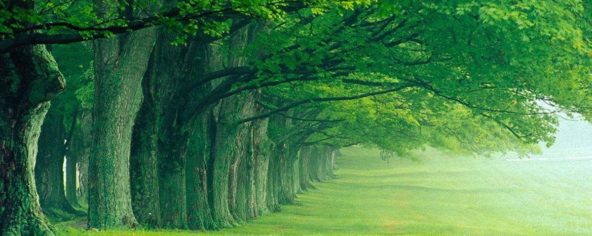 15 árvores com formatos intrigantes que parecem ter vida própria