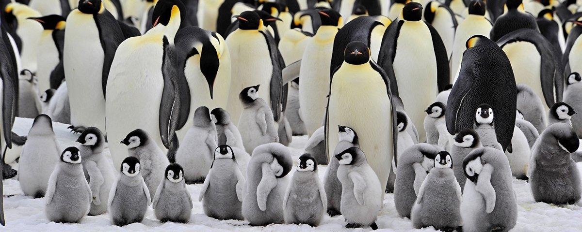 """15 filhotes de animais que não fazem jus ao ditado """"tal pai, tal filho"""""""