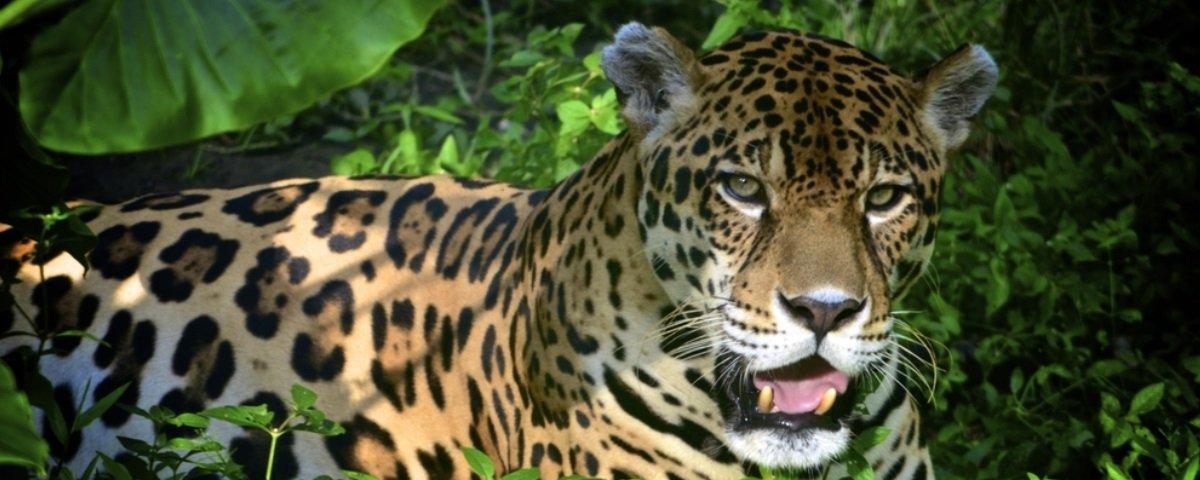 17 fatos sobre a Floresta Amazônica
