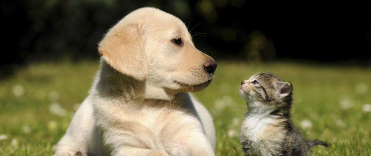 Miados e latidos com sotaque? Ouça 70 estrangeiros imitarem cães e gatos