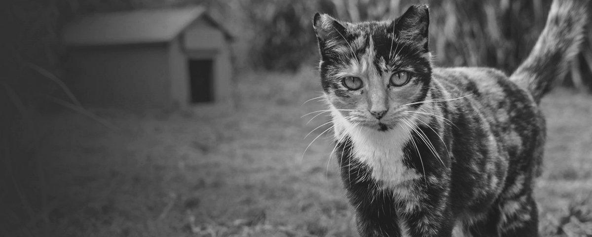 A relação entre homens e gatos em imagens de derreter o coração