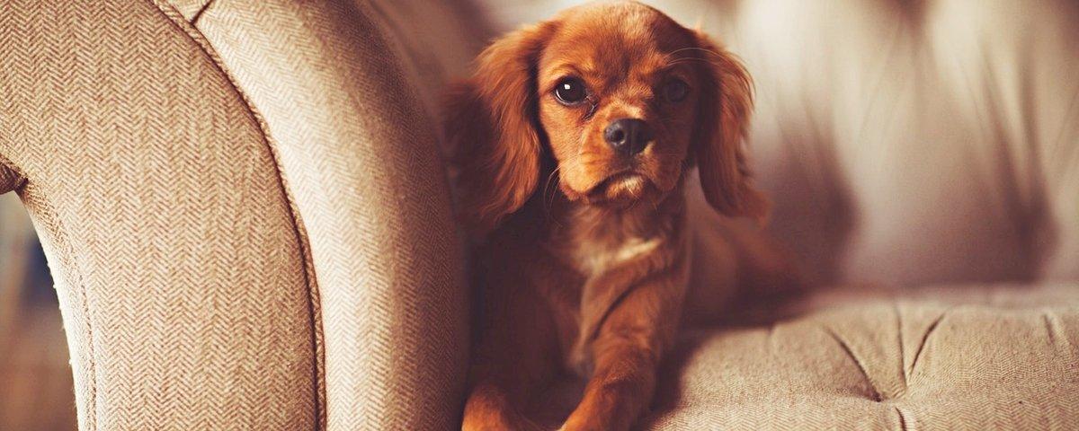10 vezes em que os cães nos ensinaram lições sobre amizade