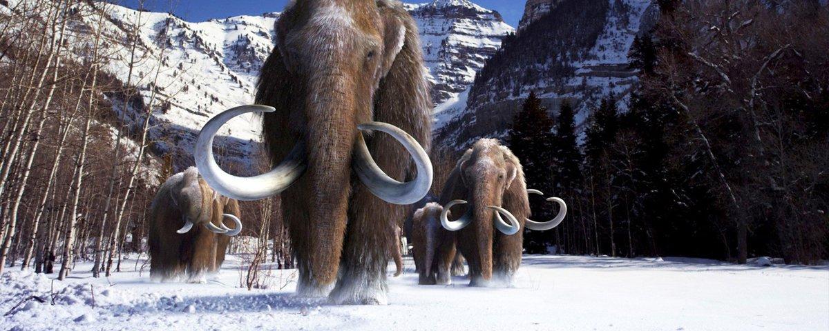 10 curiosidades cabeludas sobre os mamutes
