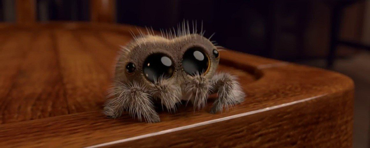 Essas aranhas ninjas são mestres em camuflagem!