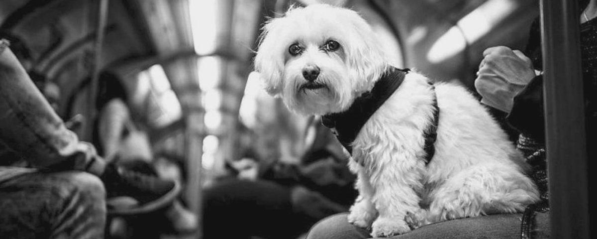 13 fotos de cães e gatos que vão sepultar o seu mau humor
