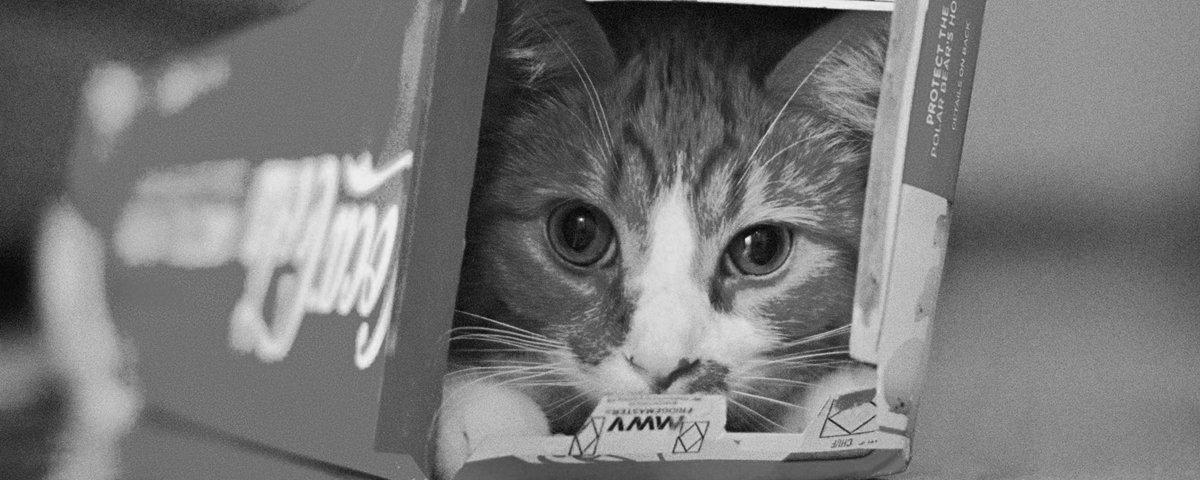 15 provas de que gatos sonolentos dormem em qualquer lugar
