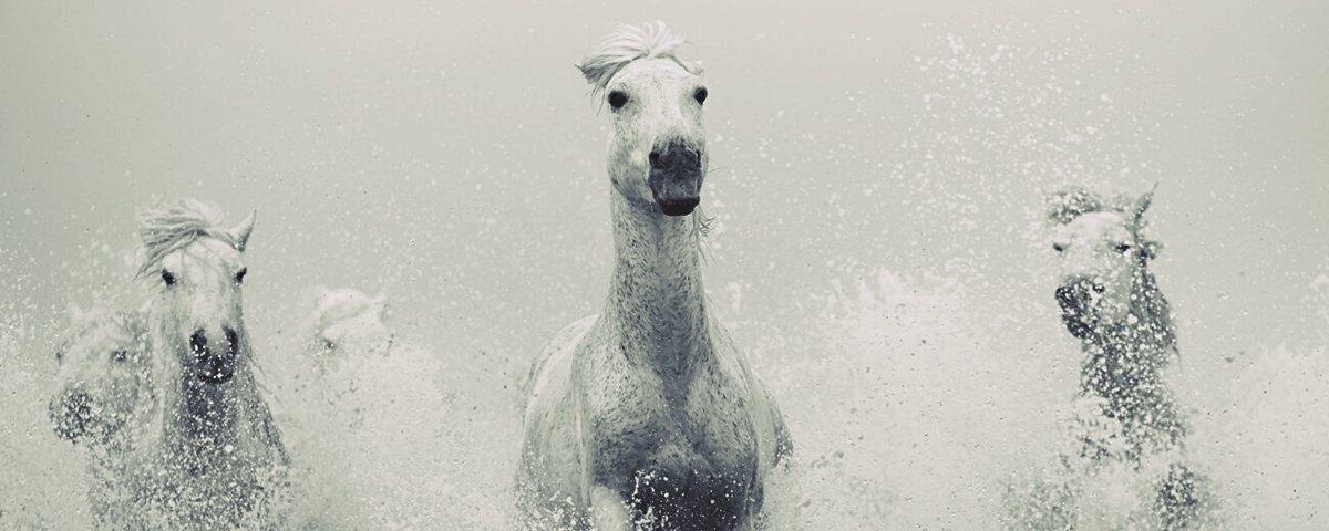 Ensaio fotográfico retrata a beleza dos cavalos selvagens da Islândia