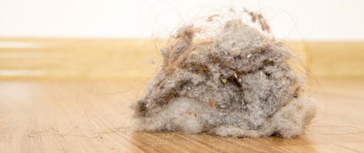 Tem Na Web - Será que o pó de nossas casas é composto principalmente por células mortas?