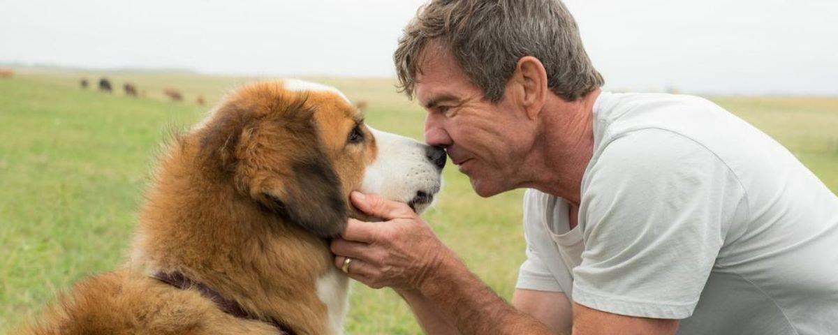 Por que os filmes avisam que nenhum animal foi ferido durante as filmagens?