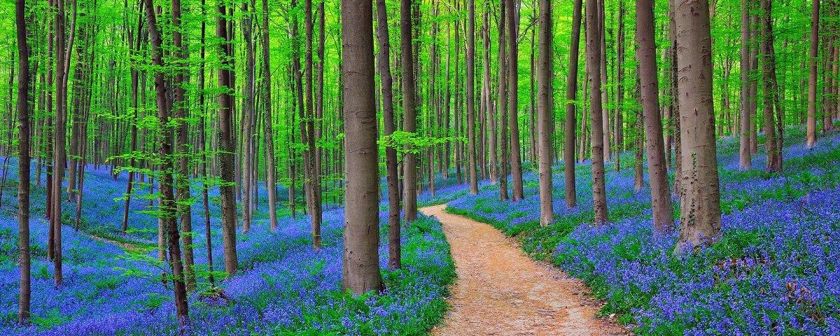 5 florestas extraordinárias ao redor do mundo