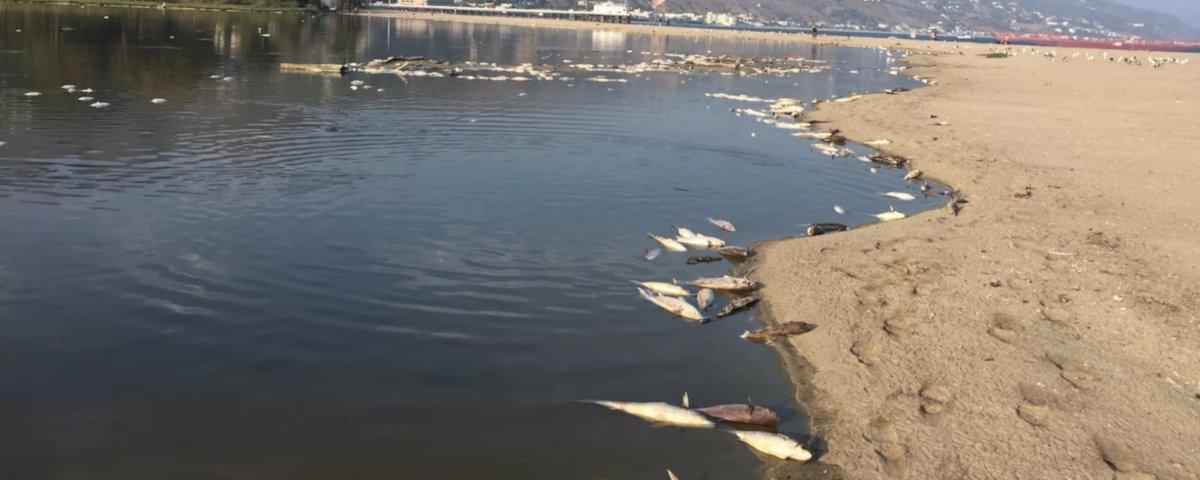 Água quente pode ter feito milhares de peixes cozinharem vivos nessa laguna
