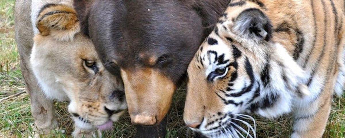 11 amizades improváveis envolvendo animais incríveis