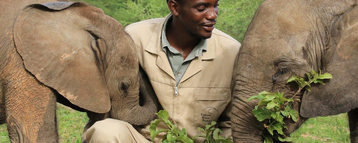 87 elefantes são encontrados mortos em reserva ambiental no Botswana