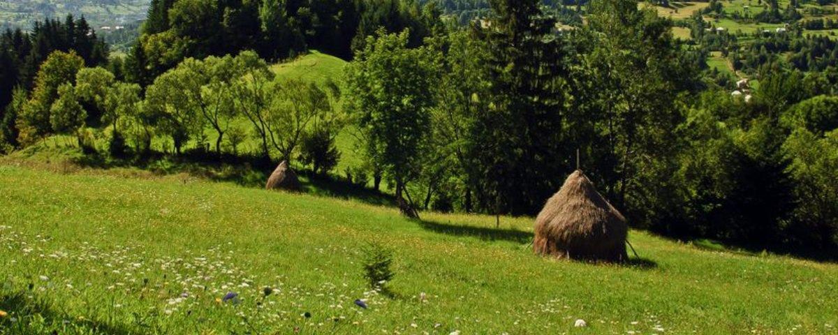 Conheça 7 fatos surpreendentes sobre os neandertais