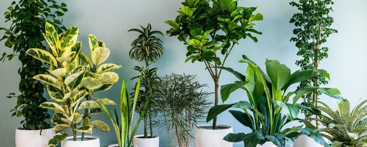 """É verdade que as plantas ajudam a """"purificar"""" o ar de nossas casas?"""