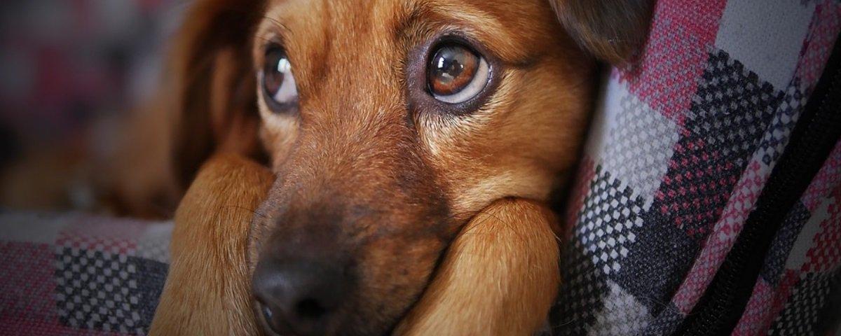 As pessoas realmente sentem mais pena de cachorros do que de pessoas