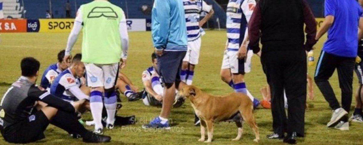 """Club 2 de Mayo, o time de futebol que tem um cachorro como """"assistente"""""""