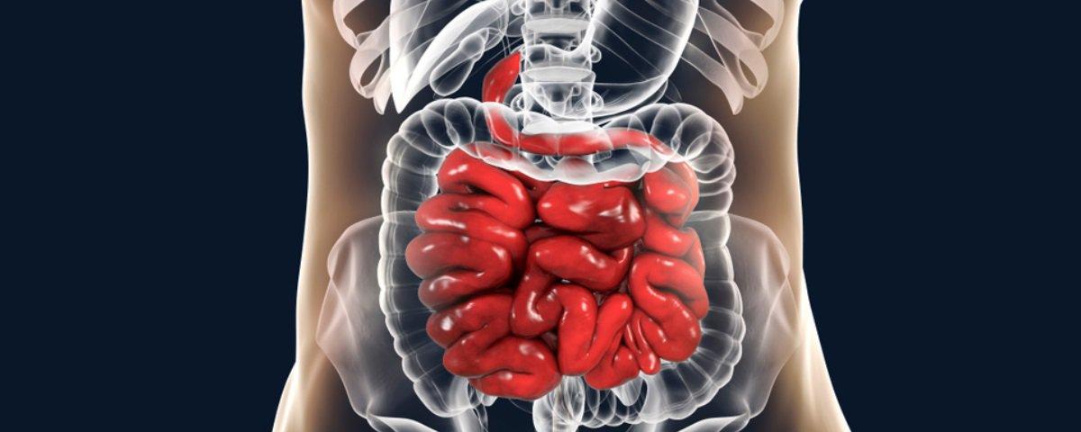 7 informações interessantes sobre o funcionamento do seu intestino