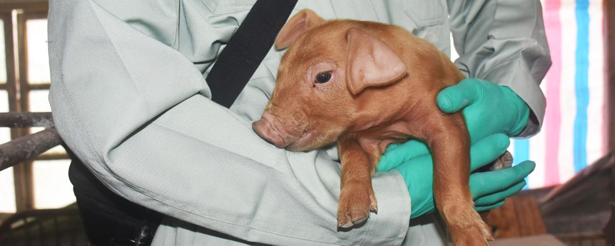 Mas, afinal, animais podem ou não sofrer com Síndrome de Down?