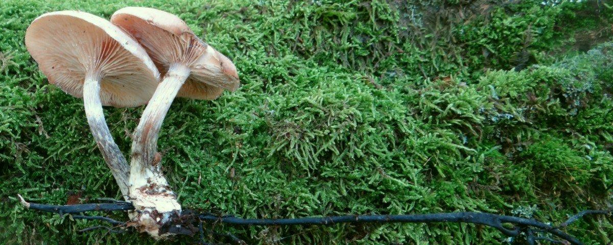 Conheça o fungo gigantesco que é maior do que uma baleia-azul