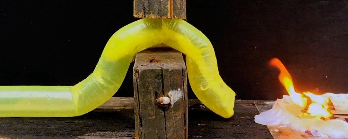 Cientistas criam robô que cresce imitando o movimento das plantas