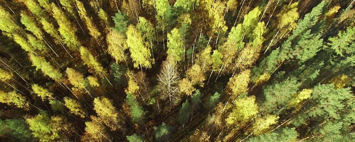 As florestas da Finlândia são 'mágicas', e esse fotógrafo mostra o porquê