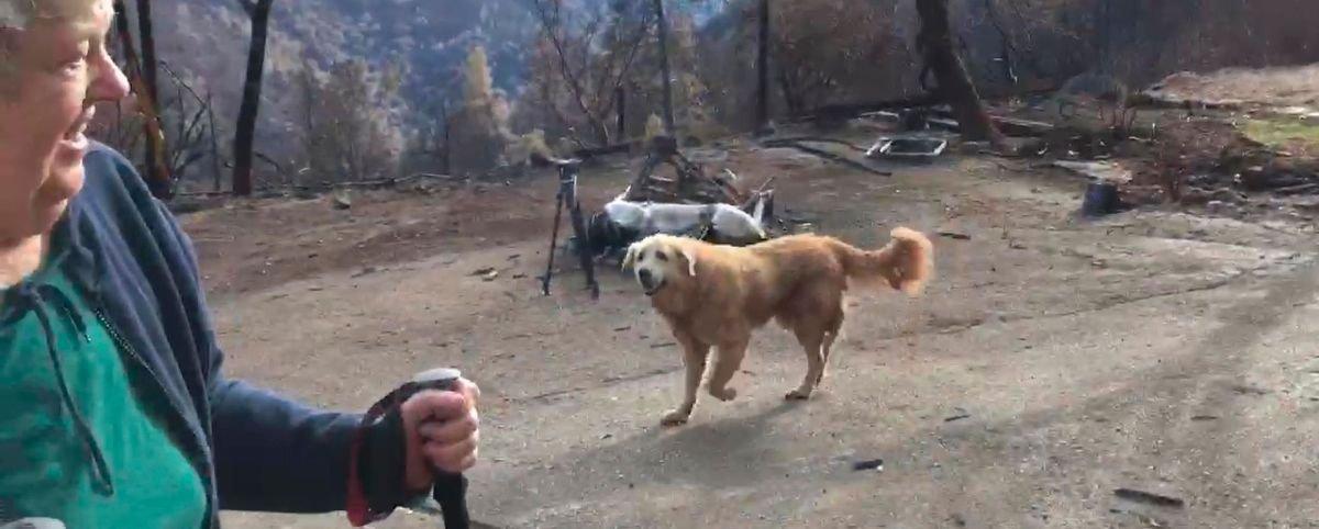 Cachorro passa 1 mês cuidando de casa destruída por incêndio na Califórnia