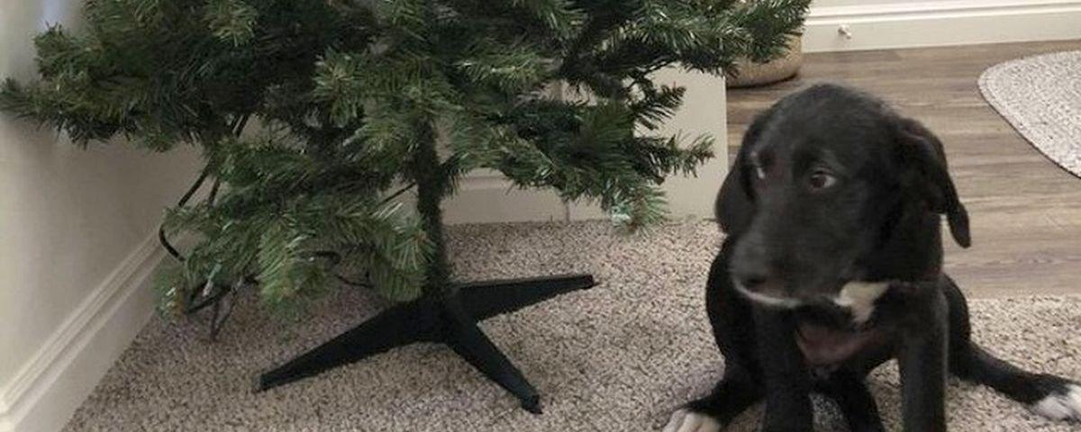 15 provas de que os cachorros são divertidos mesmo quando aprontam
