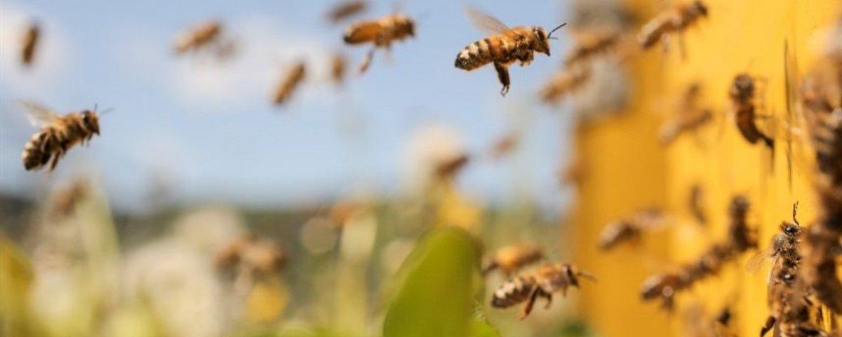 Cientistas  criam a primeira vacina para proteger abelhas de doenças