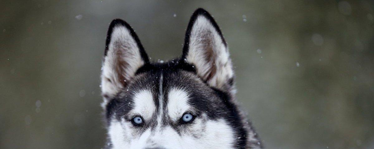 15 imagens de animais que possuem um olhar hipnotizante