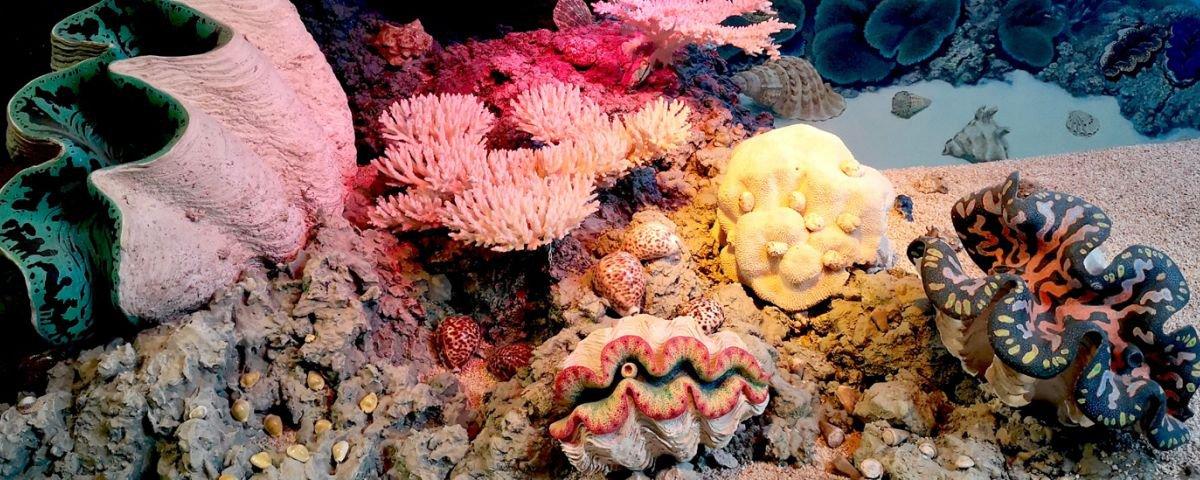 Tecnologia pode ajudar a salvar os recifes de corais