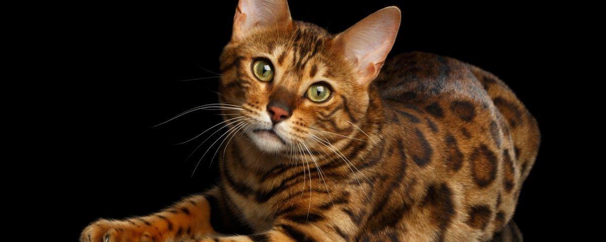 """Homem constrói verdadeira """"selva"""" em casa para gatos de seu irmão falecido"""